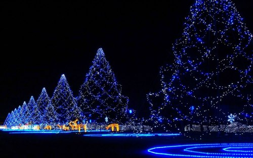 Breathtaking Outdoor Christmas Decoration