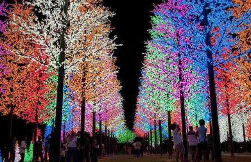 Rainbow forest Christmas lights decorations