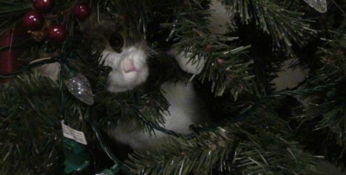 Simba in Christmas Tree