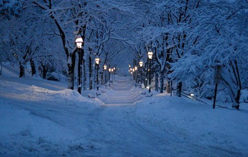 Beautiful snow covered lighted path