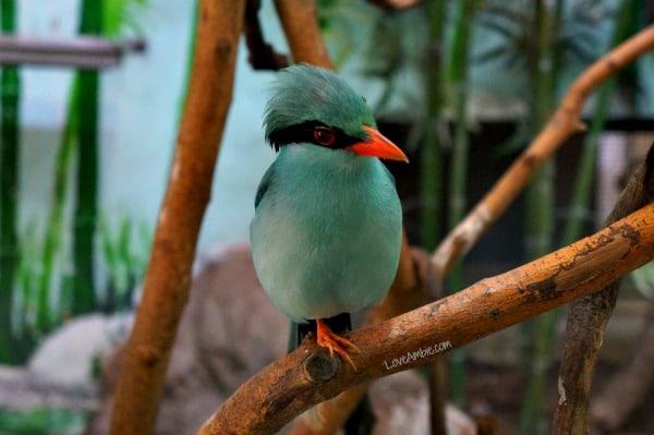 Green Magpie Shanghai Zoo