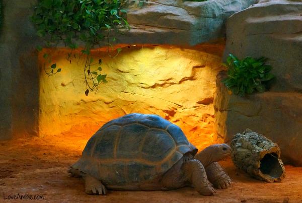 Large Land Turtle Shanghai Zoo