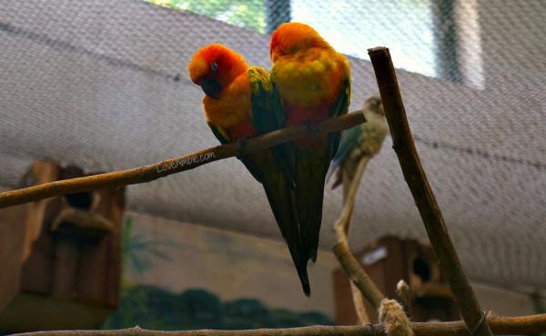 Love Birds Shanghai Zoo