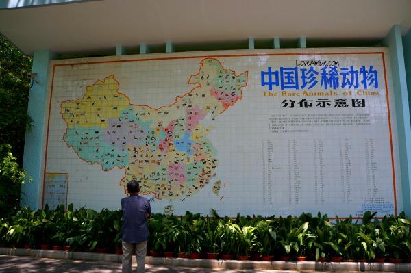 Rare Animals of China Shanghai Zoo