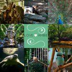 Shanghai-Zoo-China-Travel