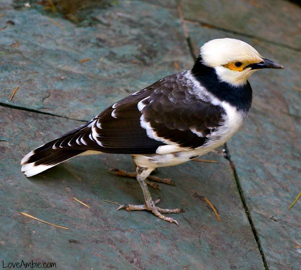 Small Bird Shanghai Zoo