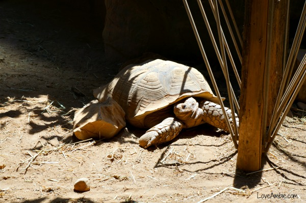Turtle Shanghai Zoo