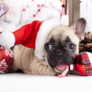 Ultimate Christmas Pictures - Christmas Pictures - Puppy Christmas Present