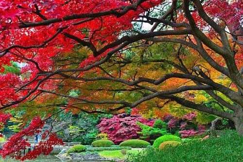 Shinjuku Gyoen Garden Tokyo - Beautiful Colors