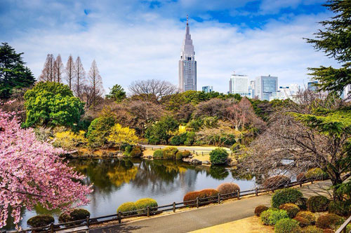 Cherry Blossoms - Best of Tokyo -Shinjuku Gyoen Garden Tokyo