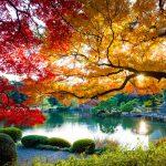 Shinjuku Garden - Best Travel Gardens Tokyo Japan