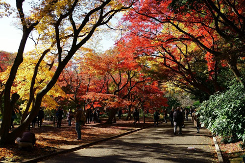 Shinjuku Garden in the Fall
