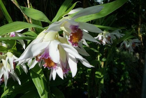 Unique Flowers from Shinjuku Gyoen Garden Tokyo - Best of Tokyo