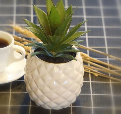 Pineapple Plant Holder