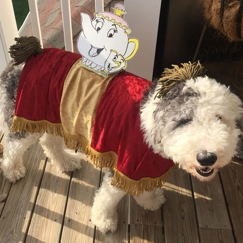 Beauty and the Beast Dog Costume - Disney Dog Costume Ideas - Halloween Dog Costumes