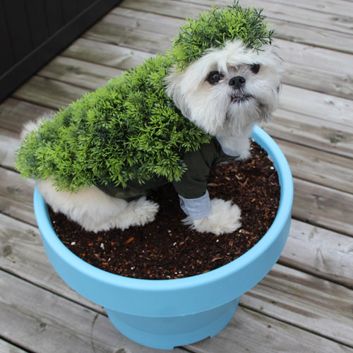 Chia Pet DIY Dog costumes - Easy Dog Costumes - Dog Costume Ideas