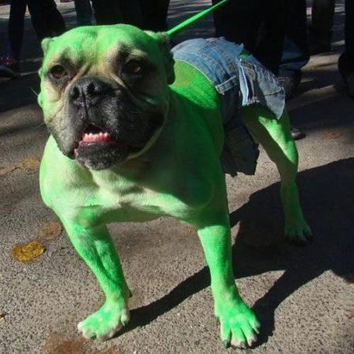 DIY Dog Costume - The Hulk Dog Costume - DIY Dog Halloween Costume