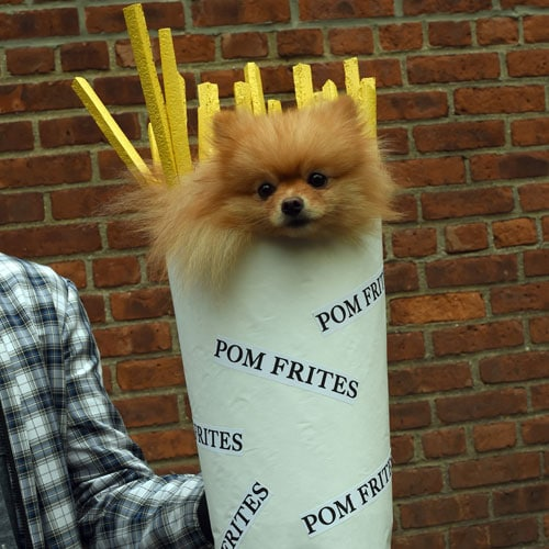 DIY Dog Costume - easy dog costumes - Pom french Fries Halloween costume - funny dog halloween costumes