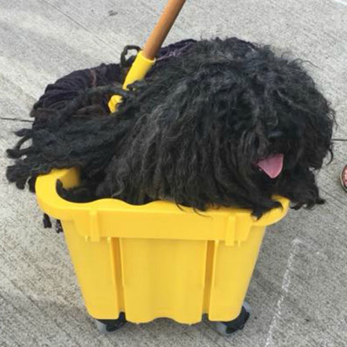 Dog Costume Mop - Homemade Dog Costumes - DIY Dog Costume