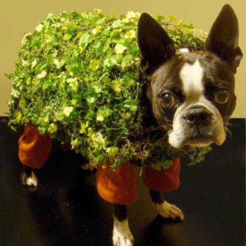 Dog Halloween Chia Pet Costume - Dog Halloween Costumes