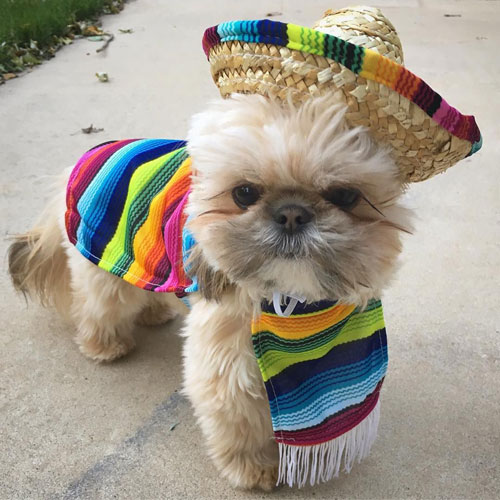 Fiesta Halloween Costume - DIY Dog Costumes