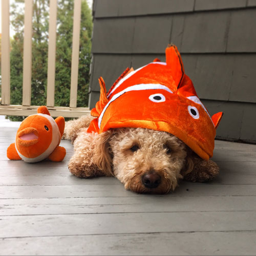 Finding Nemo Dog Costume - Disney Dog Costume - Halloween Dog Costume