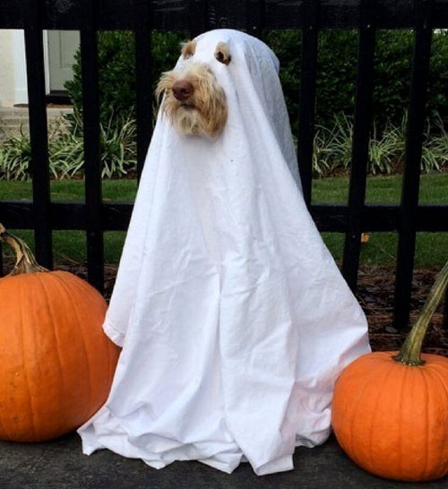 Ghost-Large-Dog-Halloween-Costumes-Homemade-Dog-Costumes-Dog-Halloween-Costumes - Easy Dog Costume
