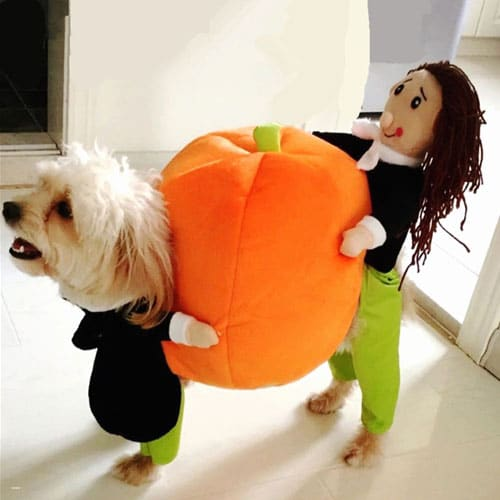 Halloween Costumes for Dogs - Dog Halloween Costumes