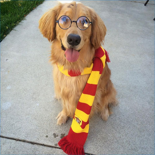 Harry Potter DIY Dog Costume Ideas - Dog Halloween costumes