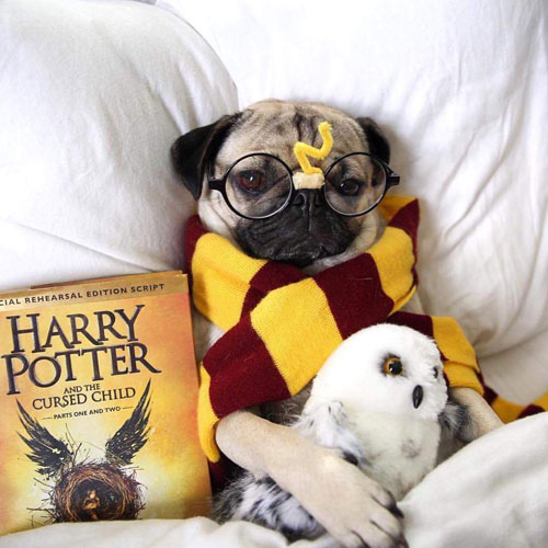 Harry Potter Dog Costume - Dog Costume Ideas - Homemade Dog Costumes - Halloween Dog Costumes