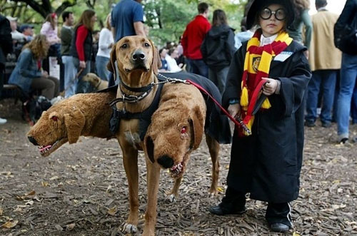 Harry Potter and Fluffy Dog Costume - Dog DIY Halloween Costume - Halloween Costumes