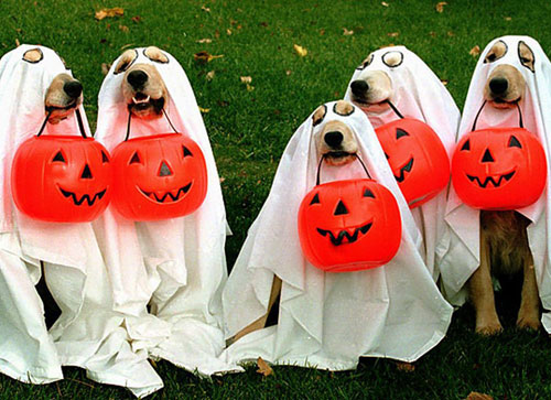 Last Minute Dog Costumes - DIY Dog Costumes - Ghost Dog Costume