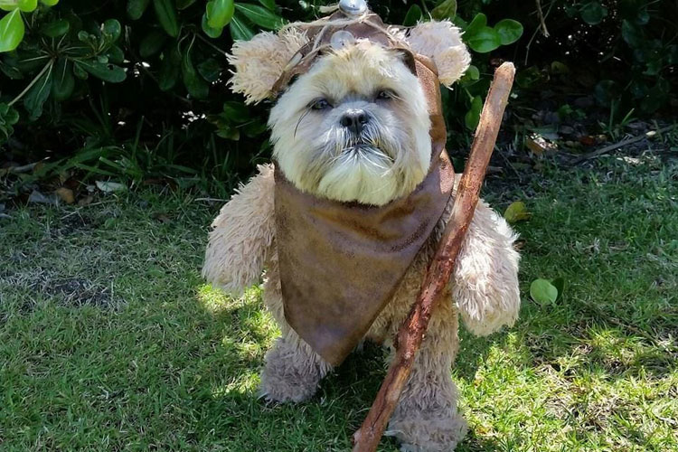 Last Minute Dog Halloween costume - Dog Halloween Costume Ideas