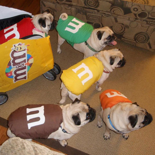 M&M DIY Dog Costumes - Dog Halloween Costume Ideas