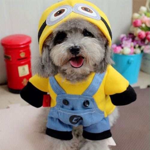 Minion Dog Halloween Costume - Halloween Dog Costume Ideas