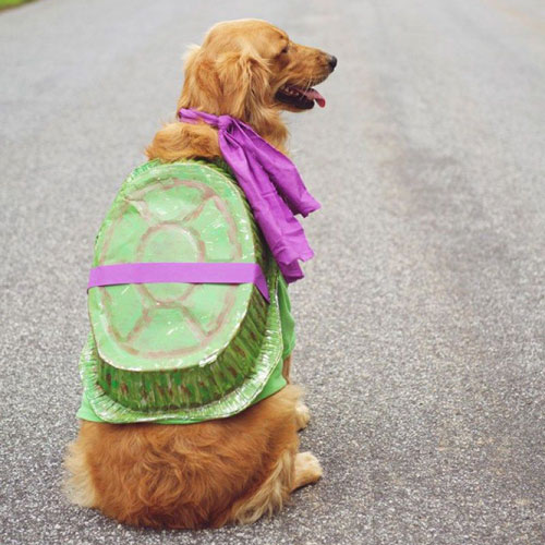 Ninja Turtle Dog Costume - Large Dog Halloween Costumes - DIY Dog Halloween Costumes