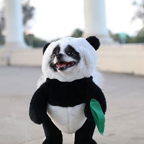 Panda Dog Costume - Funny Dog Halloween Costumes - Dog Costume Ideas