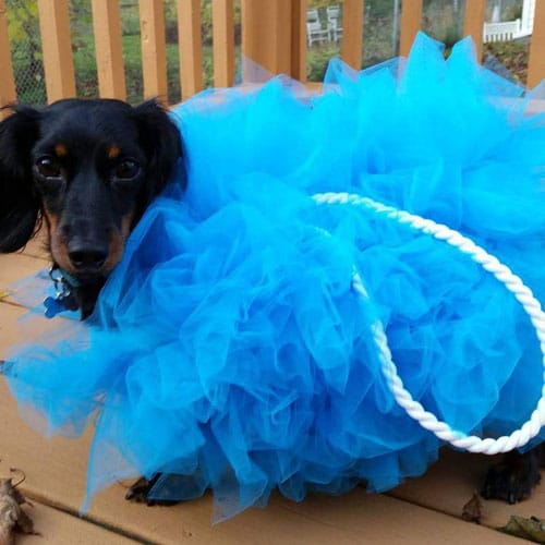 Shower Loofah DIY Dog Costume - Halloween costumes for small dogs