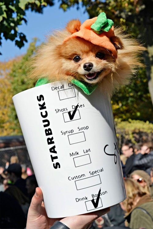 Starbucks Puppy Halloween Costume - Dog Costume Ideas - Dog Halloween Costumes