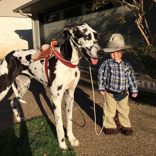 Toddler and Dog Halloween Costume - Cowboy and Horse DIY Dog Costume